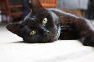 Black cat Misty