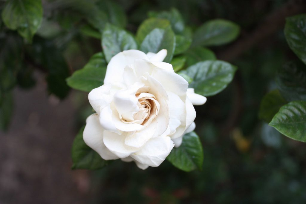 White flower from Gethsemane Community