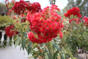 The flora of Gethsemane Community